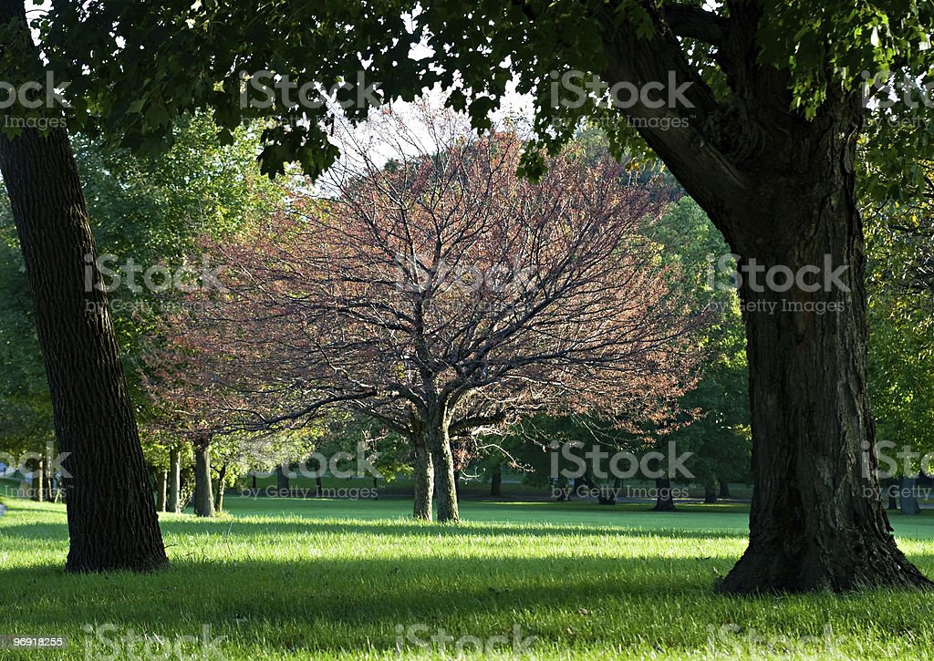 Framed Tree royalty-free stock photo