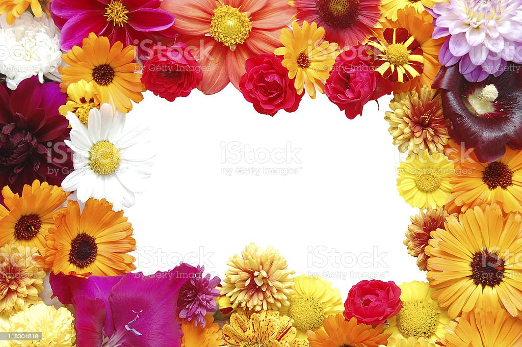 Framework from flowers with petals of various colours royalty-free stock photo