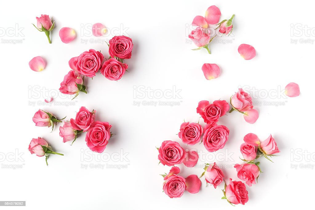 Framework from roses on white background. Flat lay. Top view stock photo