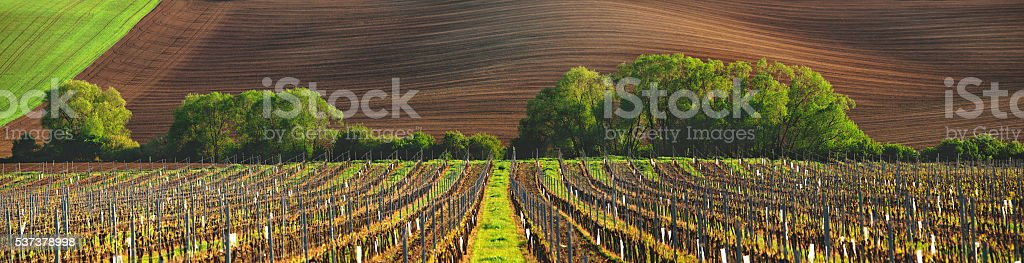 France vineyard in the evening stock photo