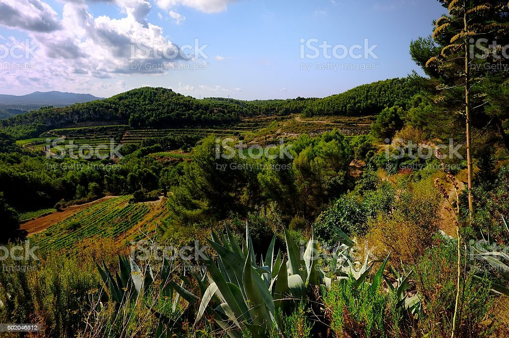 France Vineyard in the hills stock photo