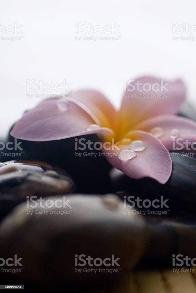 Frangipani and polished stone stock photo