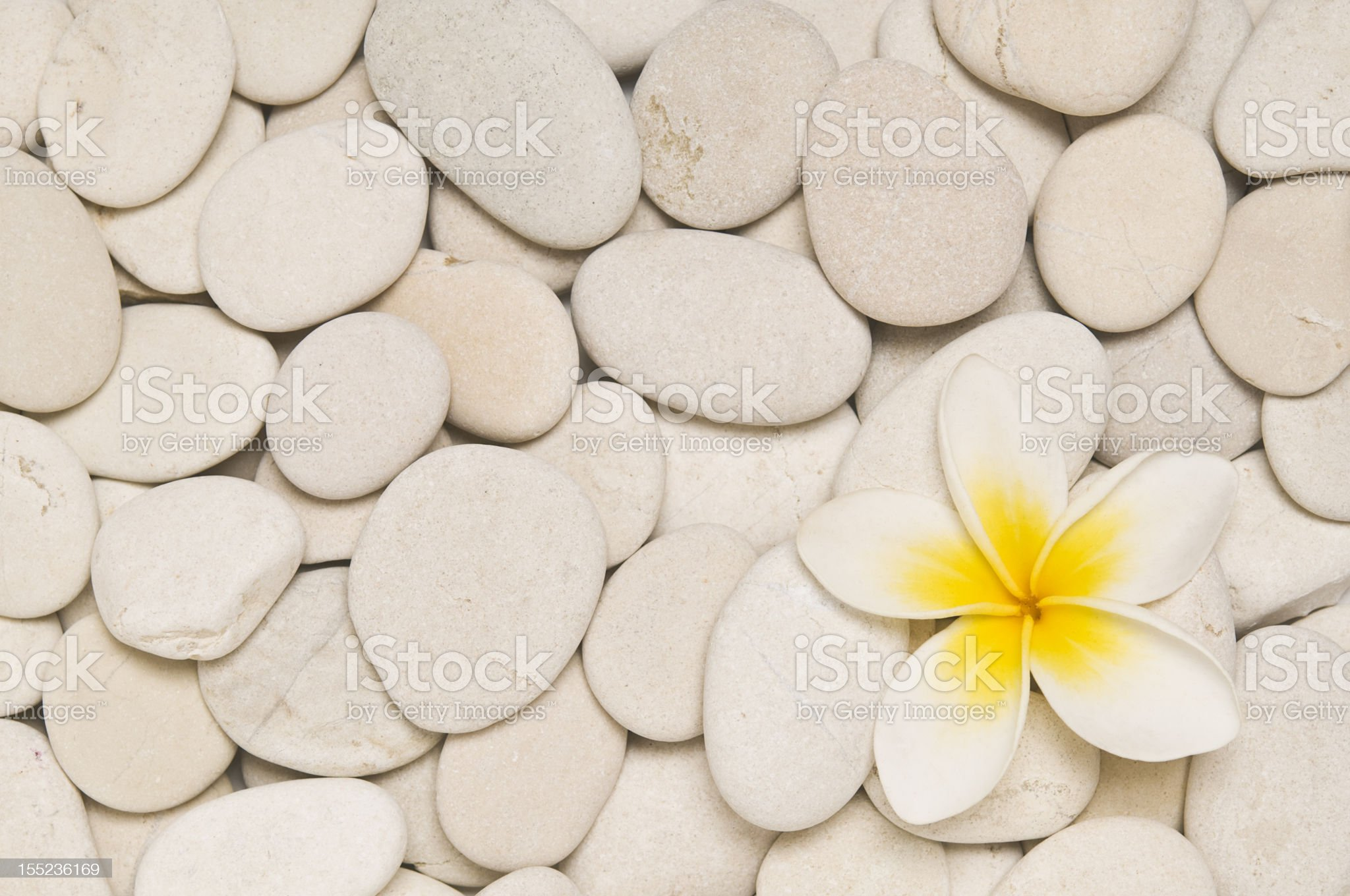Frangipani and white pebbles royalty-free stock photo