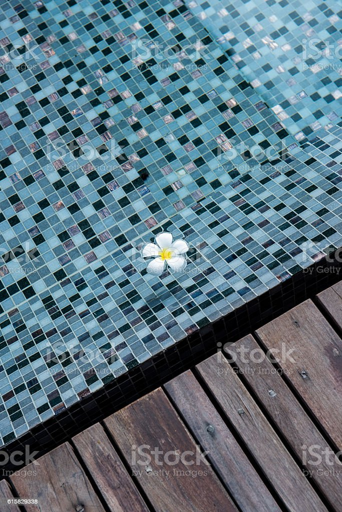 Frangipani flowers blooming in swimming pool stock photo