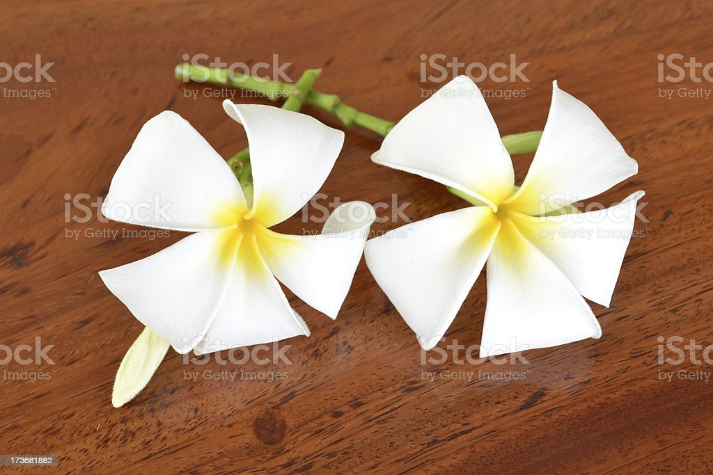 Frangipani flowers on a wooden floor. royalty-free stock photo