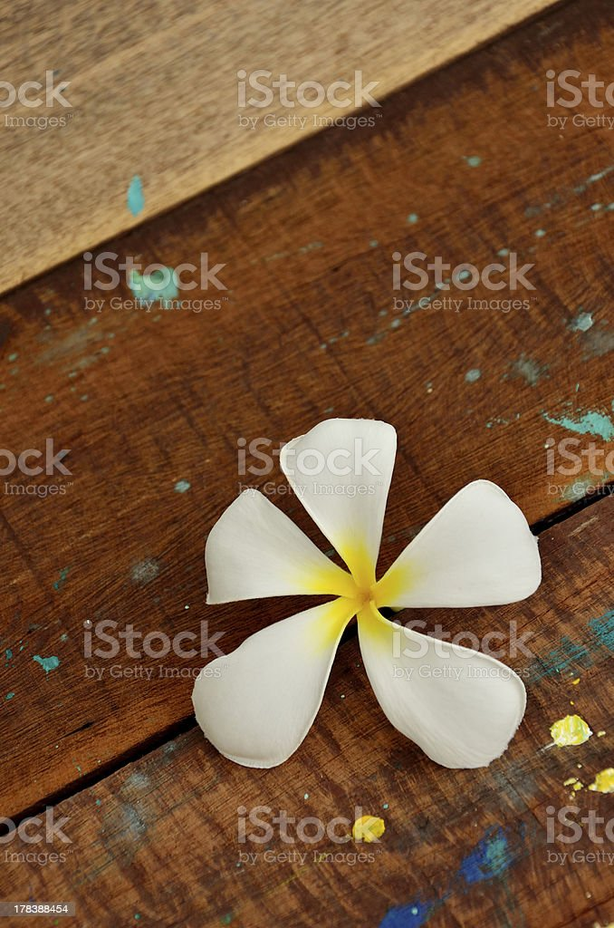 Frangipani, Tropical Flower On Wooden Table royalty-free stock photo