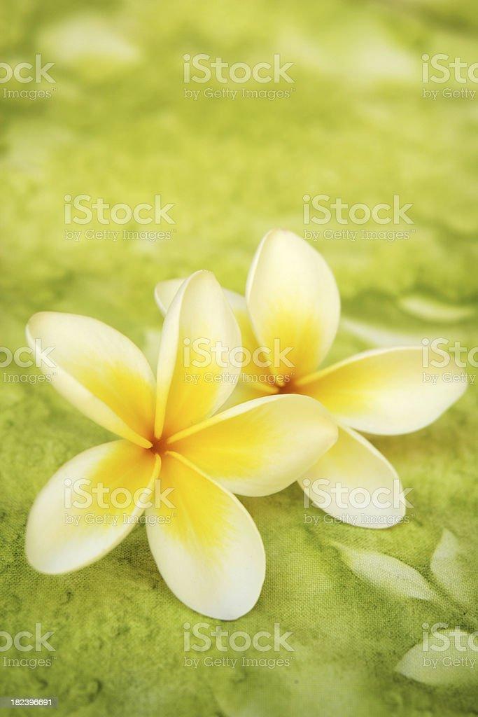 Frangipanis on green background royalty-free stock photo