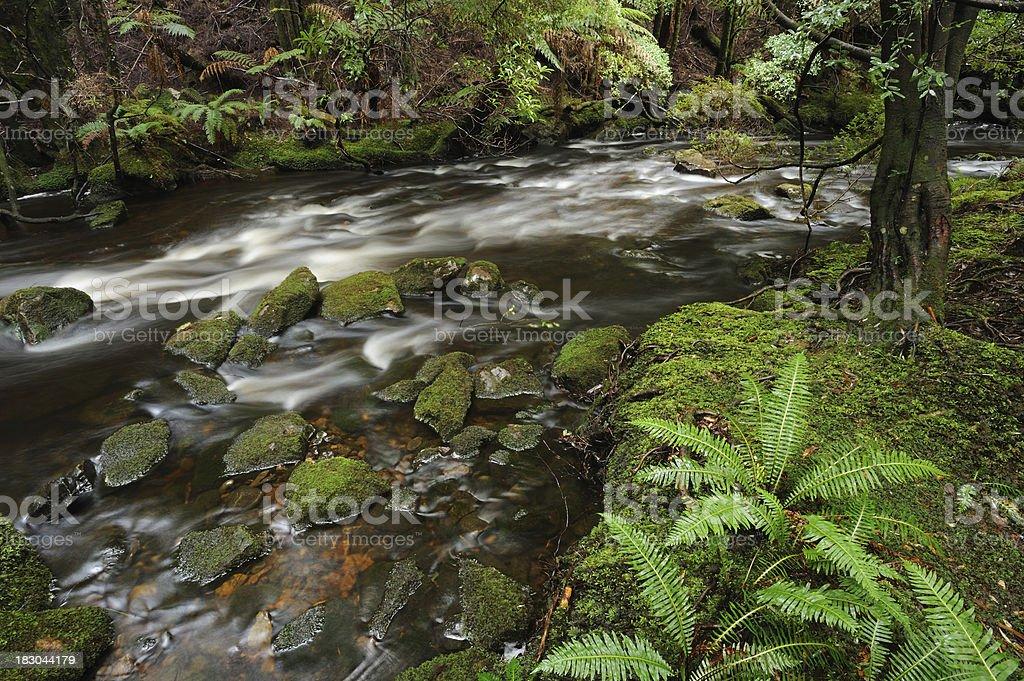 Franklin-Gordon Wild Rivers National Park in Tasmania stock photo