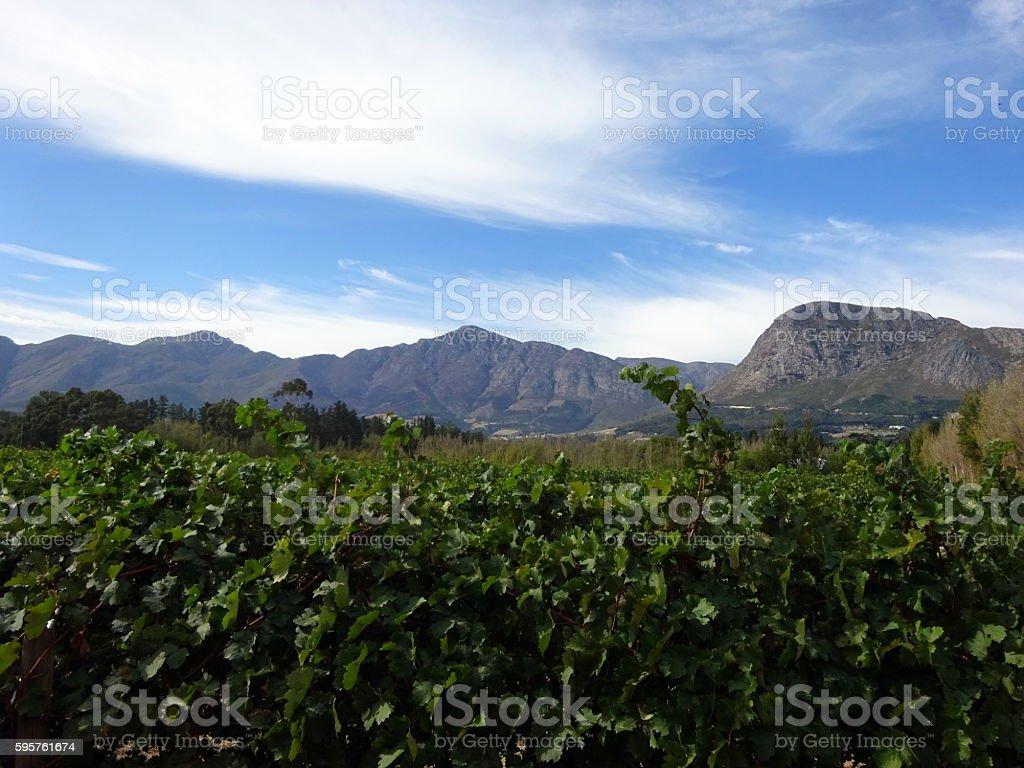Franschoek landscape stock photo