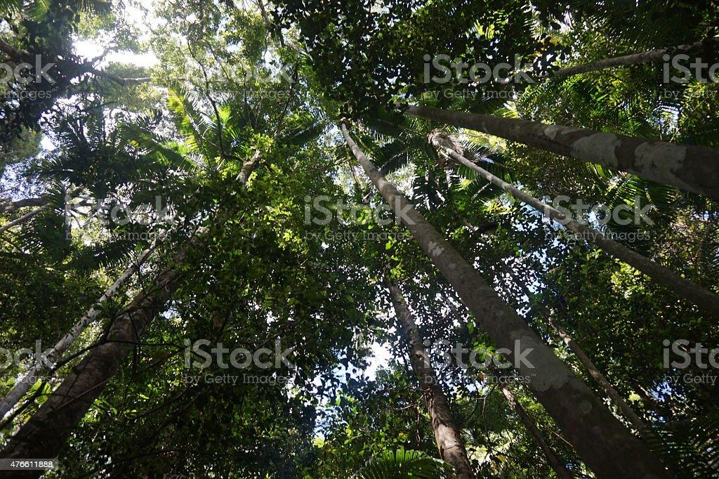 Fraser Island Rainforest Canopy stock photo