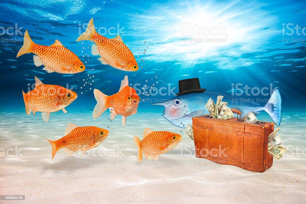fraud fish concept stock photo