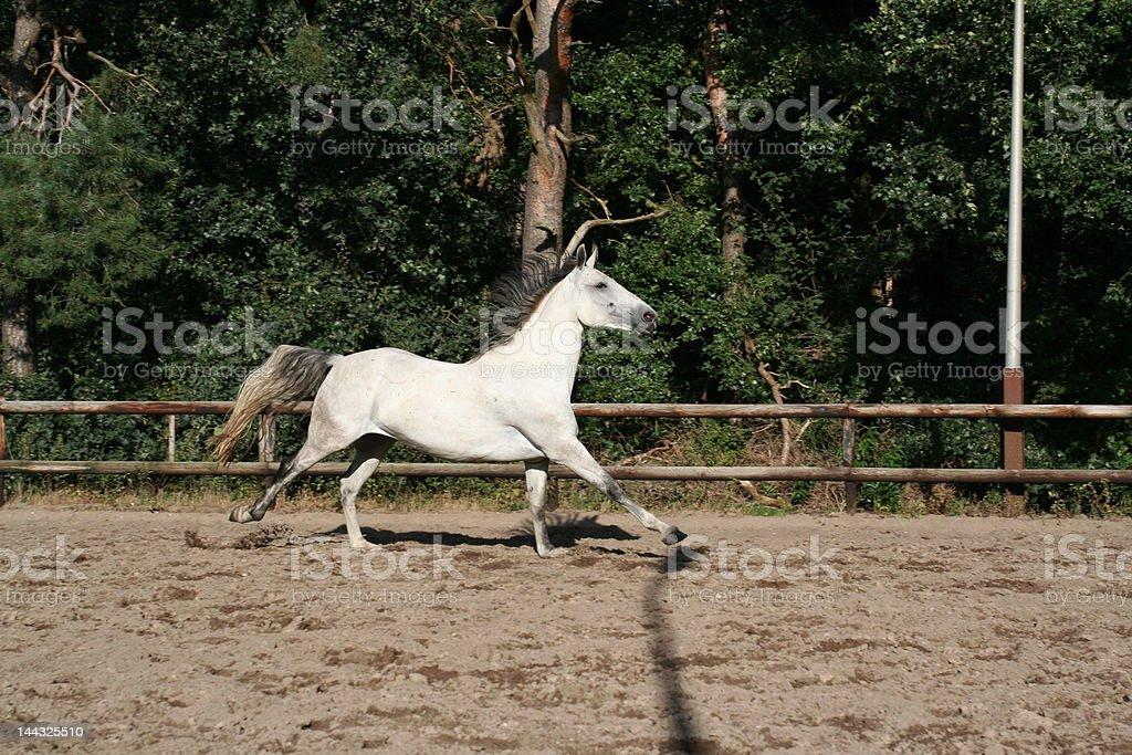 Cambio de gallop foto de stock libre de derechos