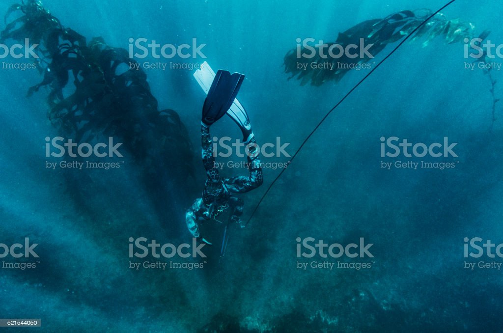 free dive stock photo