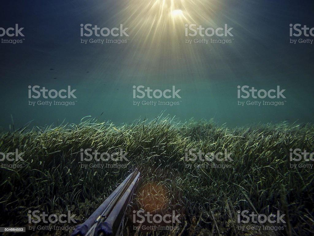 Free diver spearfishing gun perspective stock photo