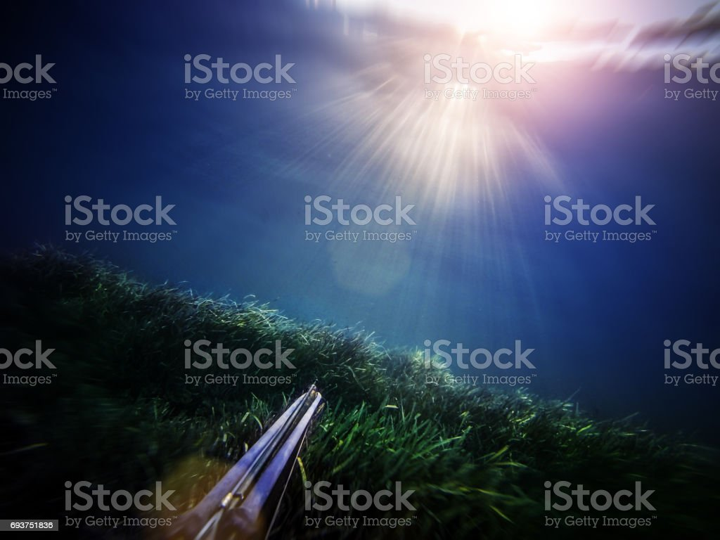 Free diver spearfishing in blue sea stock photo