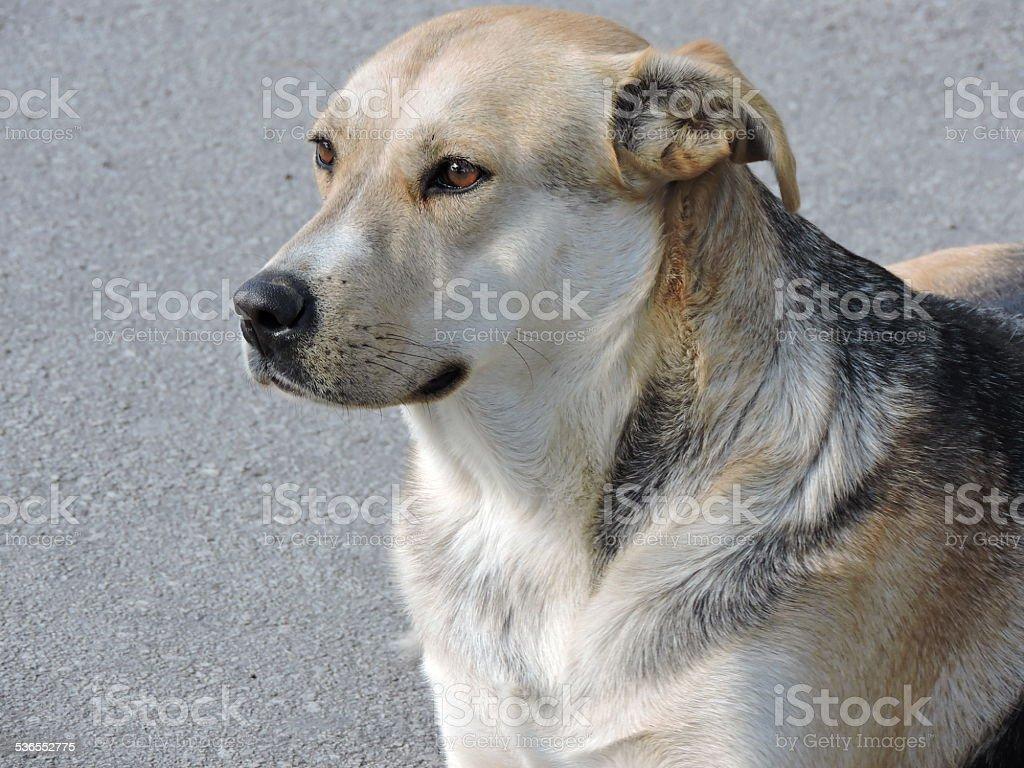 Free dog stock photo