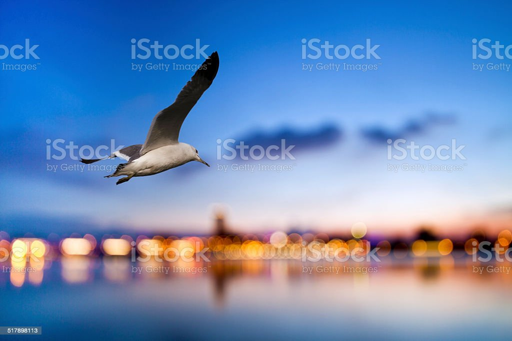 free flight through our wings stock photo