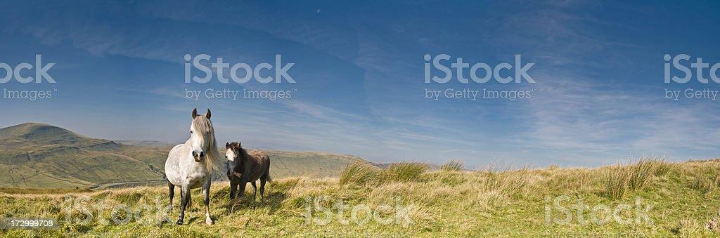 Free horses wild landscape stock photo