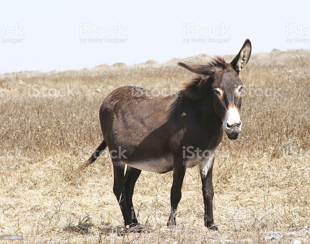Free Mule royalty-free stock photo