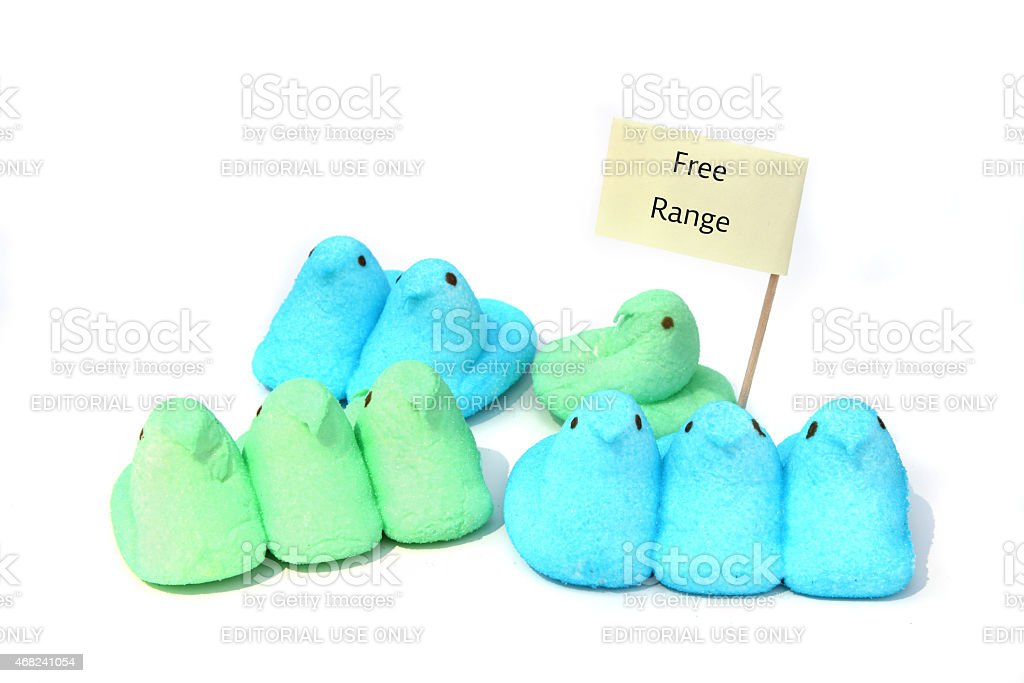 Free Range Peeps Easter candy marshmallow chicks stock photo