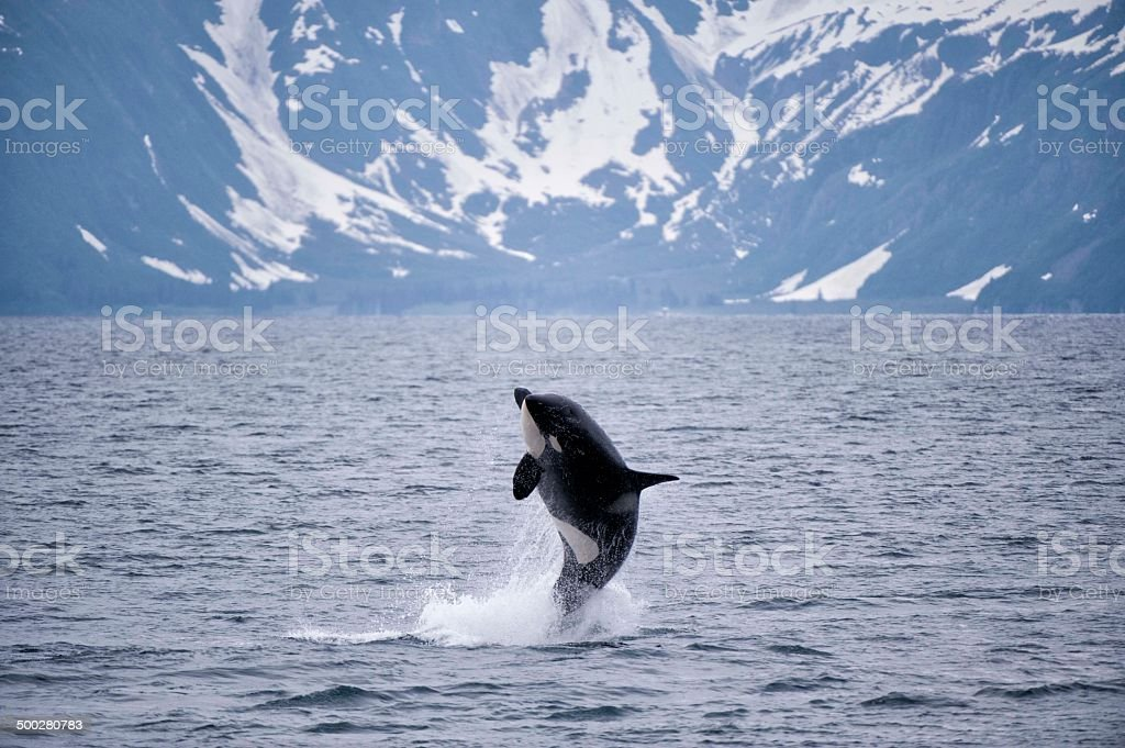 Free Willy stock photo