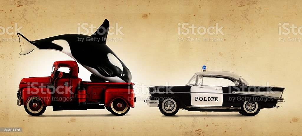 free willy! stock photo