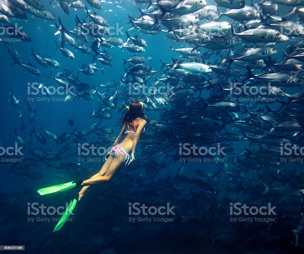 Freediver and fish stock photo
