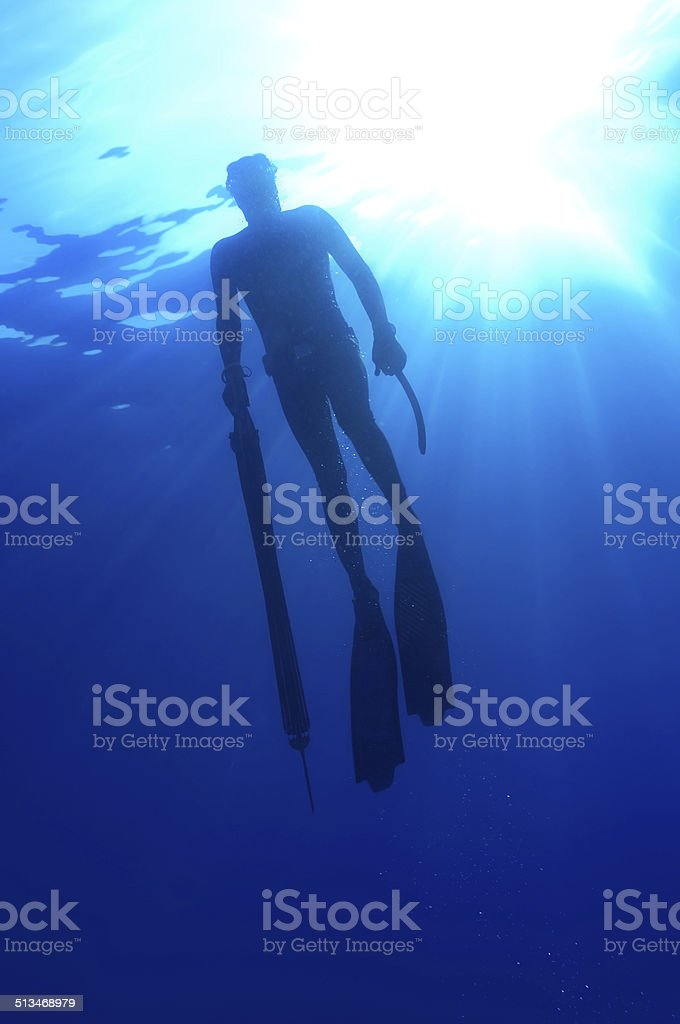 freediver stock photo