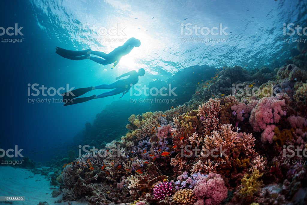 Freedivers stock photo