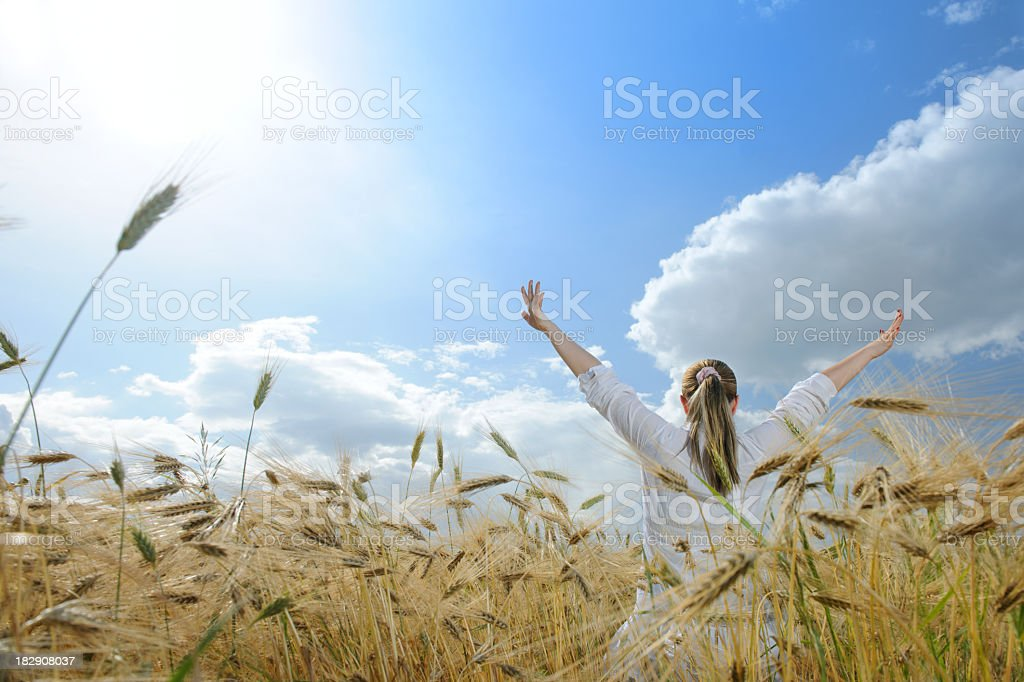 freedom corn field royalty-free stock photo