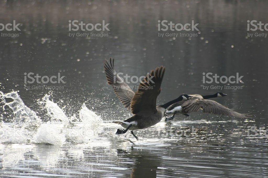 Freedom Flight royalty-free stock photo