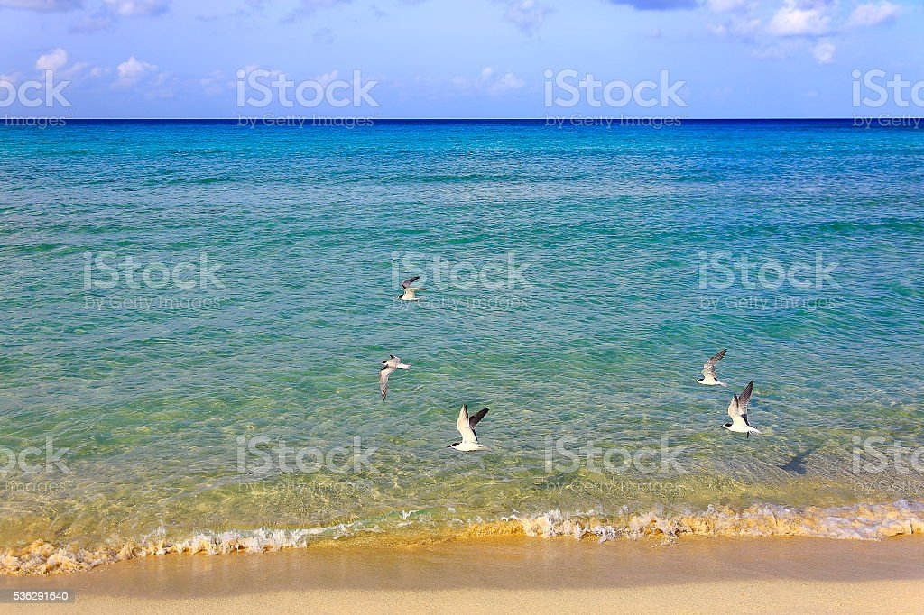 Freedom: Sea Birds flying above Idyllic turquoise caribbean beach stock photo