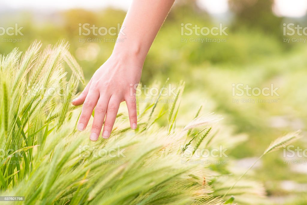 Freedom, Woman hand Touching softly nature stock photo