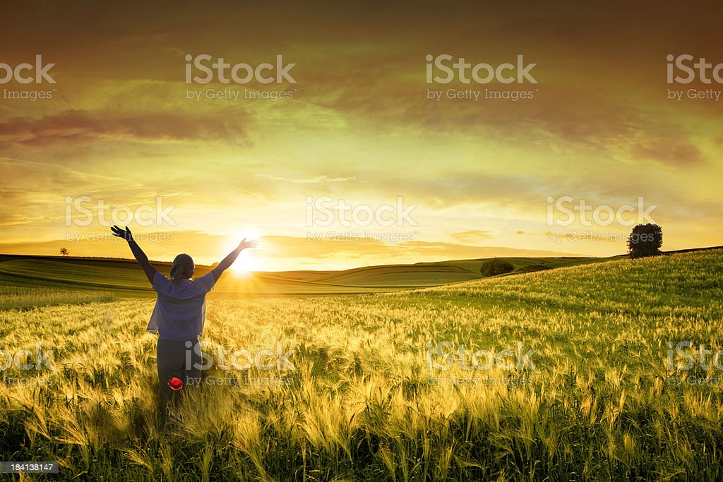 Freedom - Woman with raised Arms in Sunset Wheat Field royalty-free stock photo