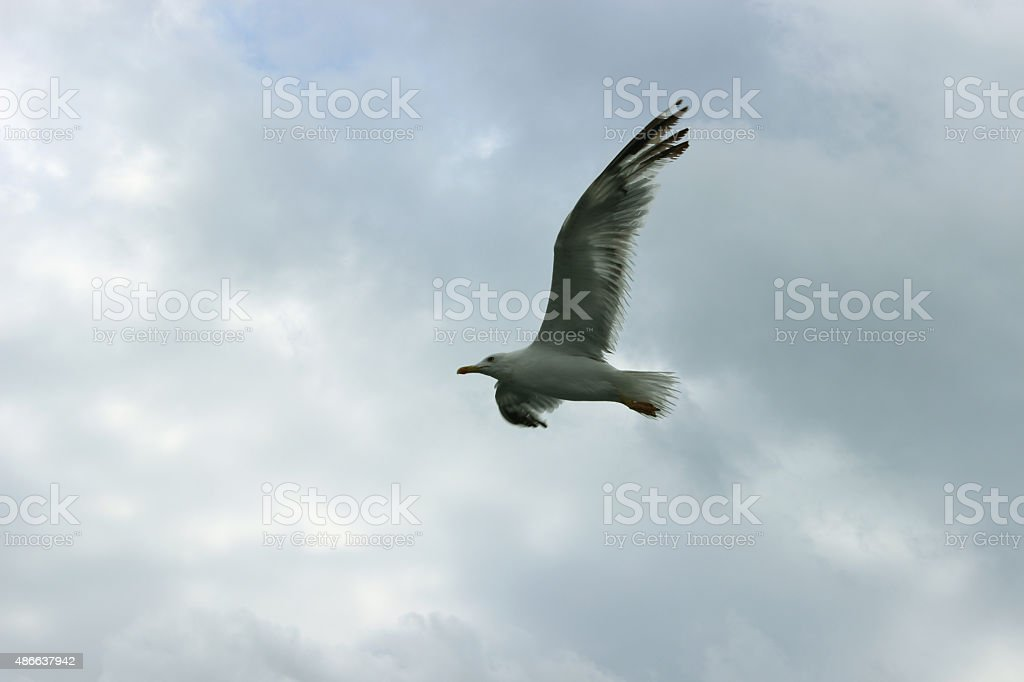 Freely to soar stock photo