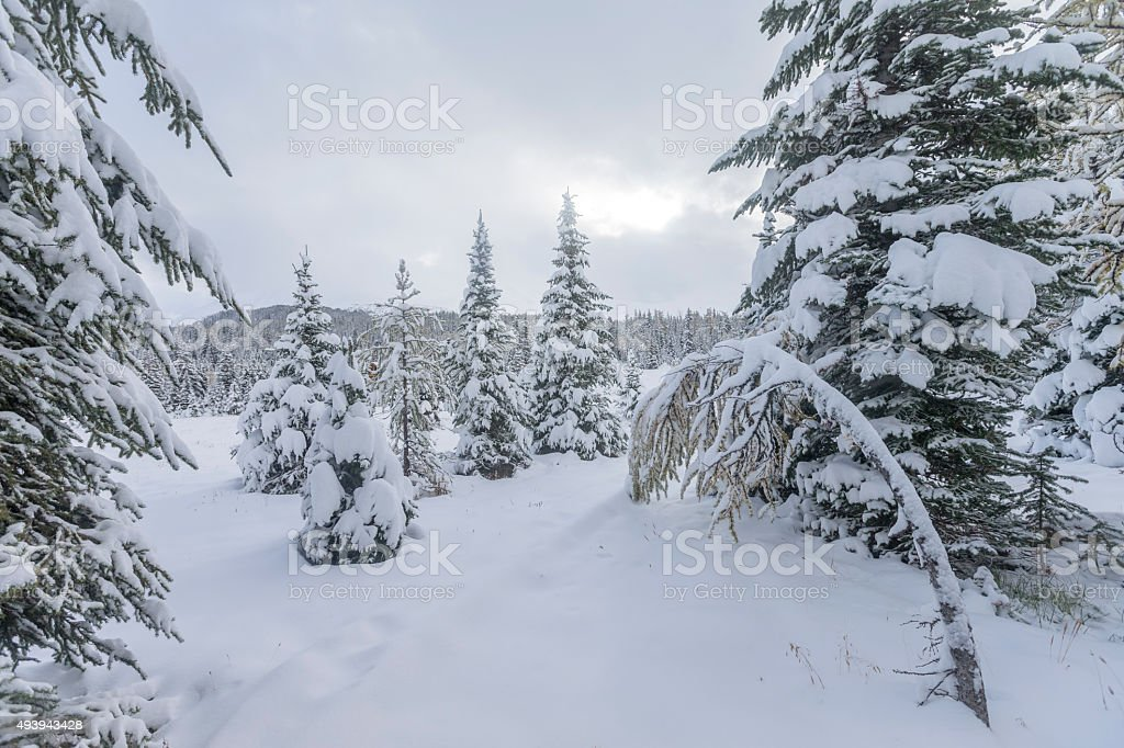 Freezing Day at Mount Assiniboine Provincial Park, Canada. stock photo