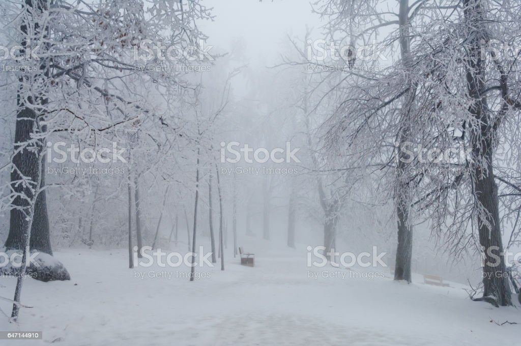 Freezing rain covered the trees and surface in a park forest stock photo