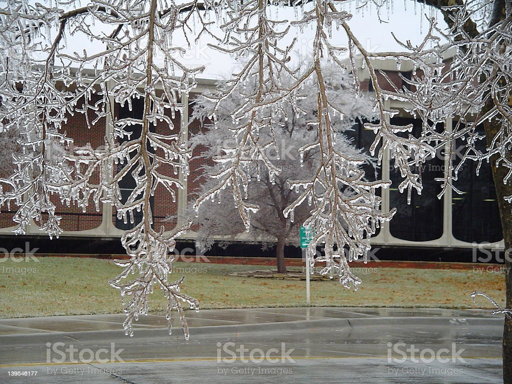 Freezing rain series #1- Tree stock photo