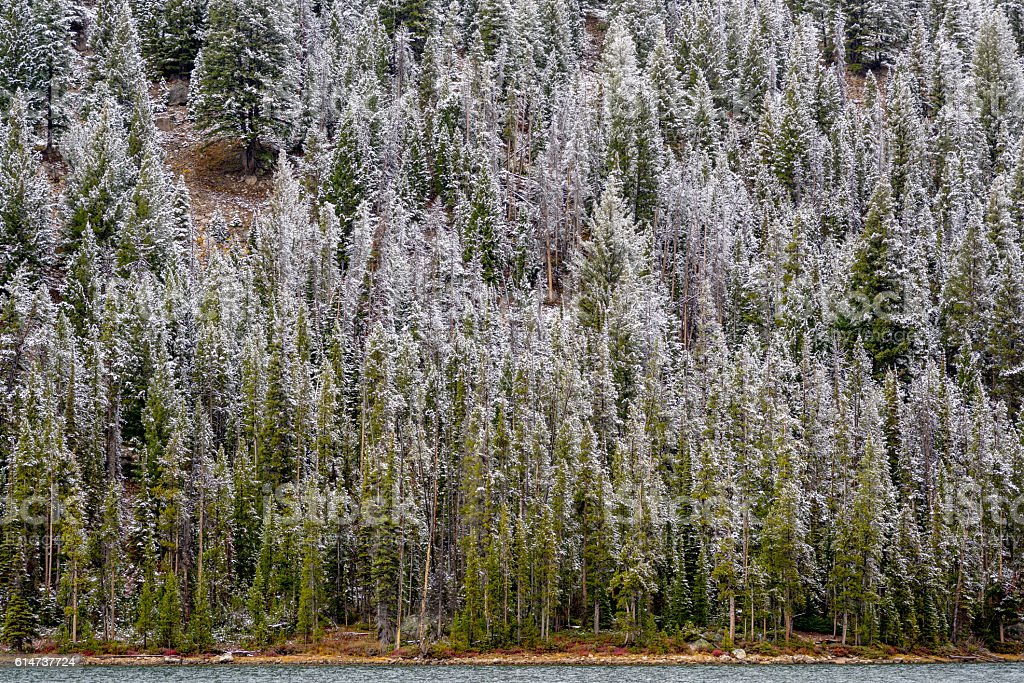 Frehs snowcovered forest and lake stock photo