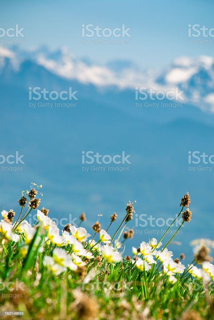 French Alps with Wildflowers in Spring royalty-free stock photo