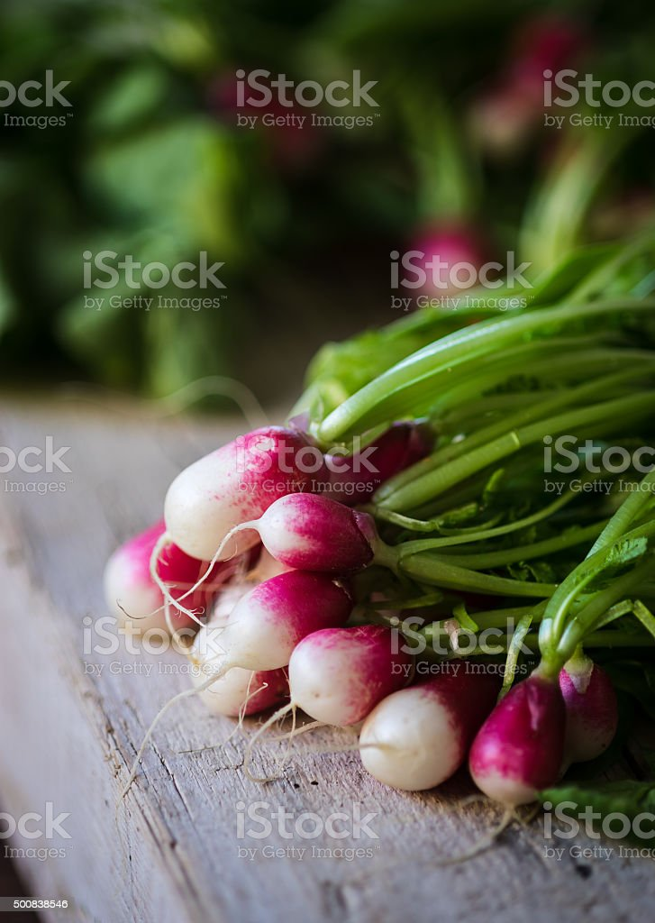 French breakfast radishes in sunlight stock photo
