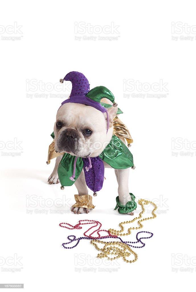 French Bulldog Jester royalty-free stock photo
