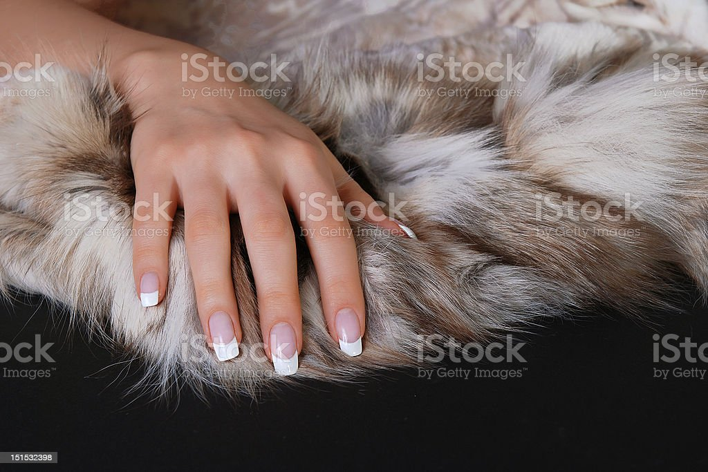 French manicure and furs stock photo