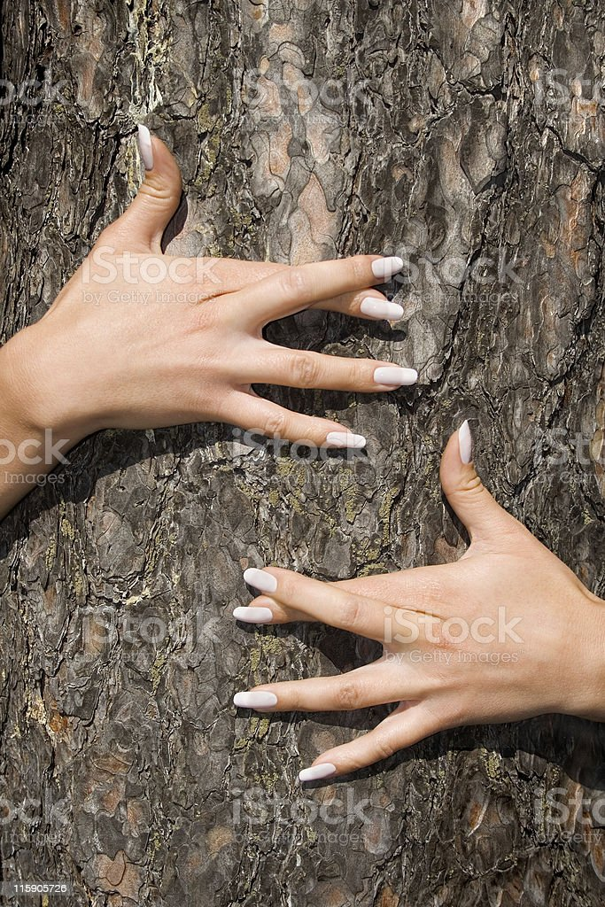 French manicure on a bark royalty-free stock photo