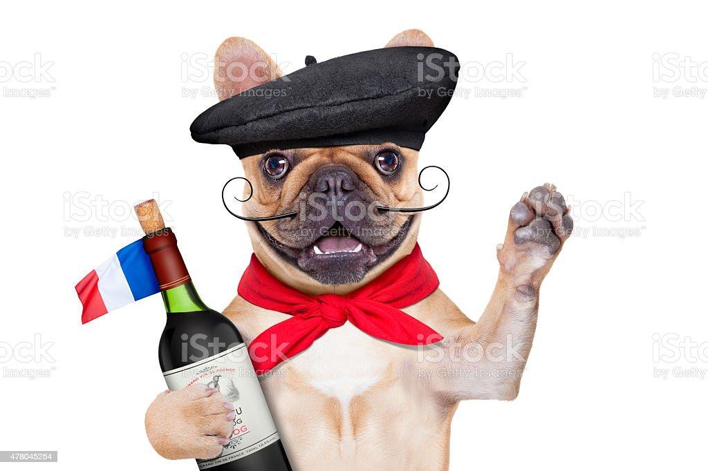 french proud   dog stock photo