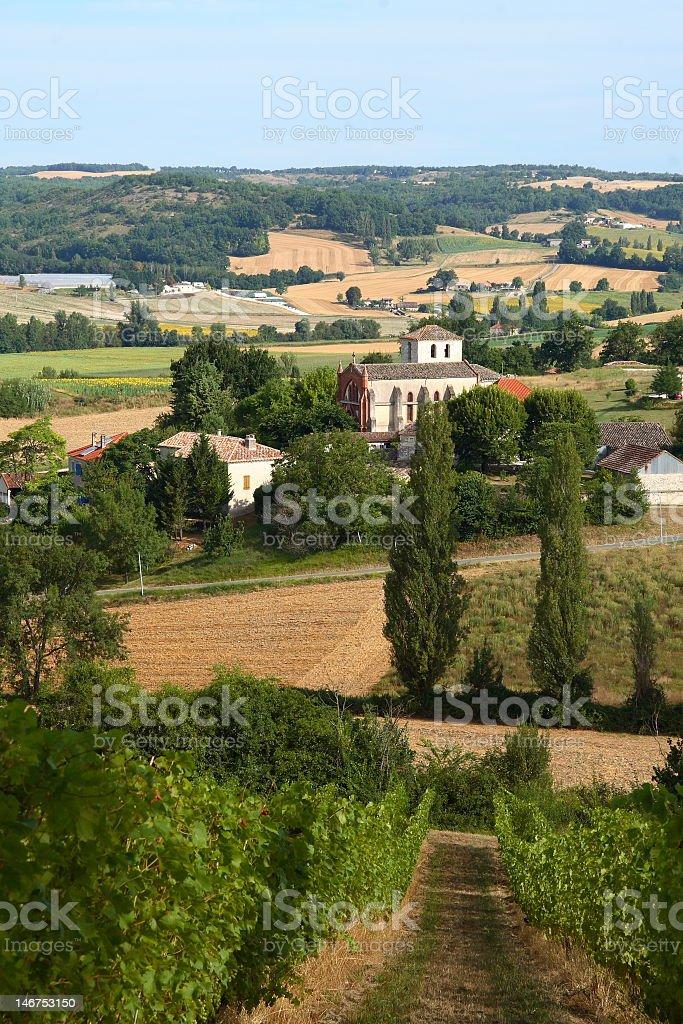 french vineyards stock photo