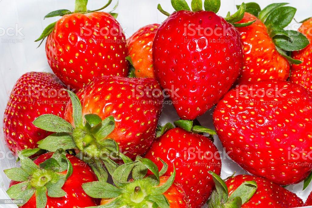 fresas stock photo