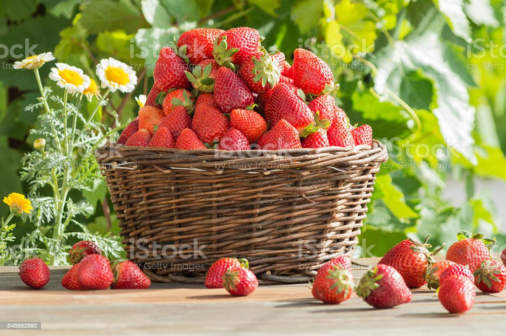 fresas  photo libre de droits