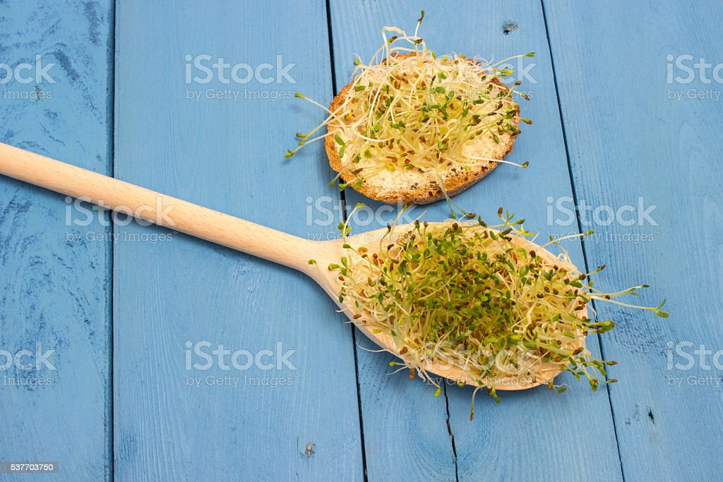 fresh alfalfa sprouts on a blue board stock photo