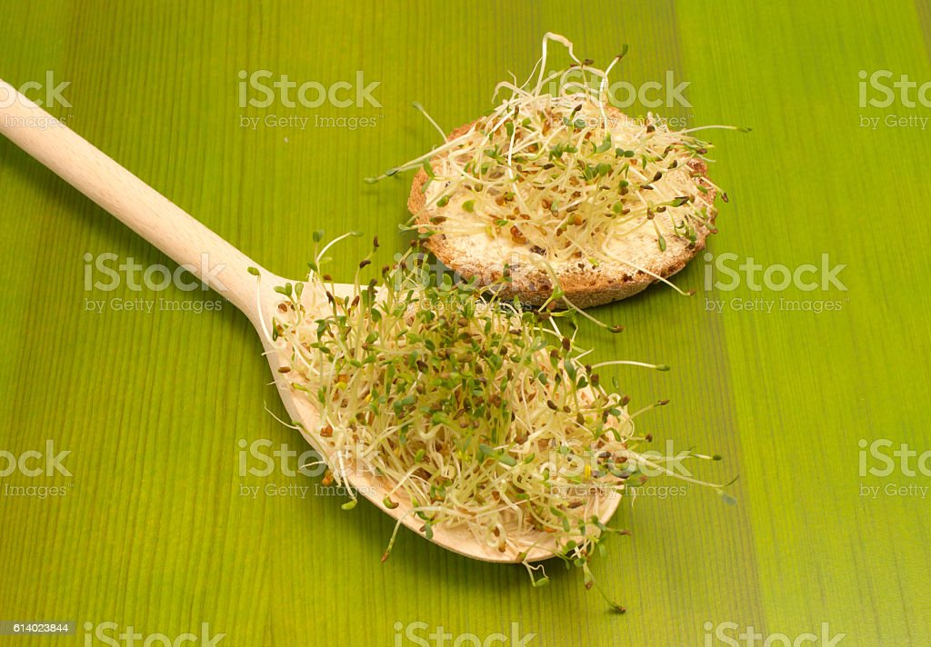 fresh alfalfa sprouts on a green board stock photo